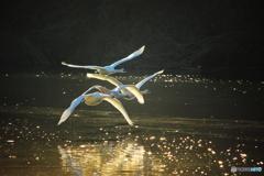 琥珀色の飛翔