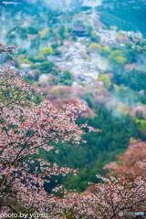 吉野山 上千本桜