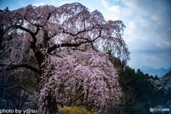 春景の身延山久遠寺⑥