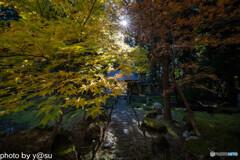 京都 常照皇寺の紅葉②
