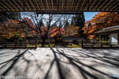 京都 常照皇寺の紅葉①