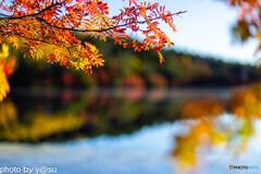 白駒池の紅葉Ⅶ