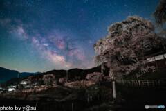 勝間薬師堂のしだれ桜と天の川②