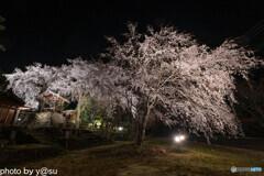 長延寺の桜ライトアップ①