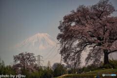 わに塚の桜②