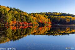 白駒池の紅葉Ⅴ