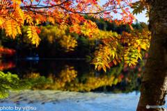 白駒池の紅葉Ⅷ