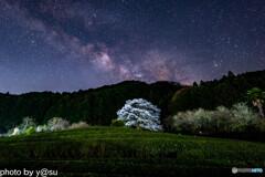 茶畑の一本桜と天の川