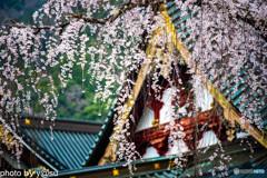 春景の身延山久遠寺⑤