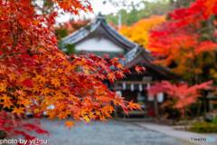 京都 亀岡市 鍬山神社の紅葉