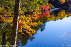 白駒池の紅葉Ⅸ