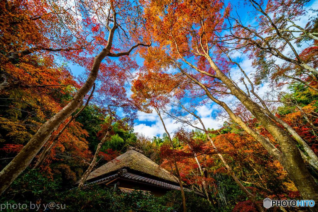祇王寺の紅葉と青空