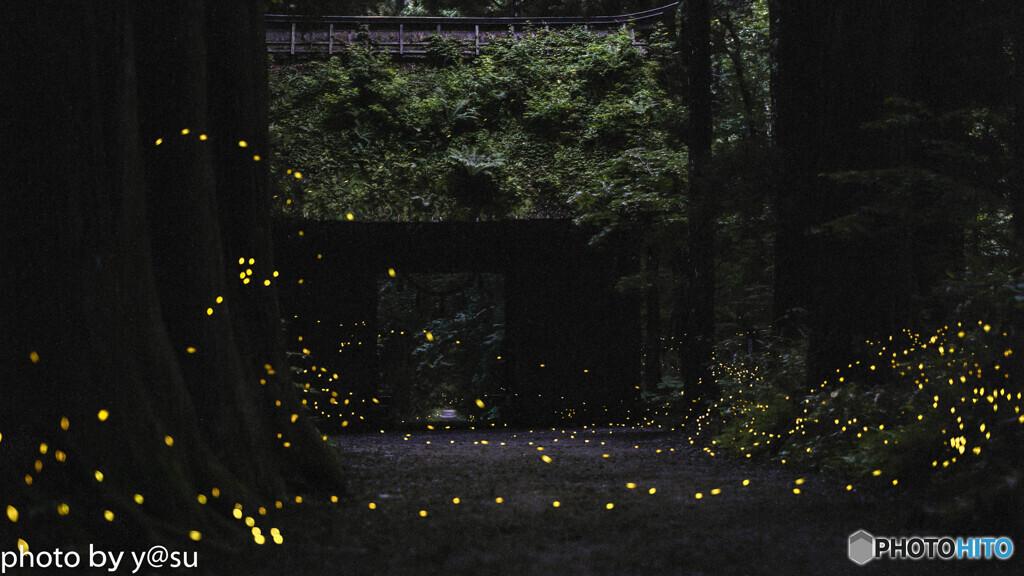 参道を舞う森の妖精