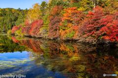 白駒池の紅葉Ⅹ