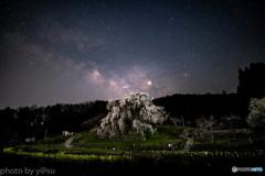 又兵衛桜の星空