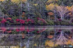 白駒池の紅葉Ⅳ