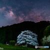 竹原淡墨桜の星空