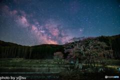 エドヒガン桜と天の川