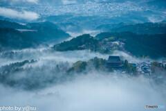 吉野山の雲海と千本桜②