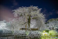 夜の京都 雪景色②