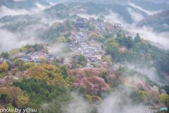 吉野山の雲海と千本桜①