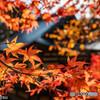 京都 高雄山神護寺の紅葉