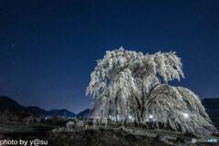 和美の桜と星空