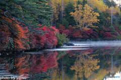 白駒池の紅葉Ⅰ