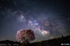 一本桜と夏の天の川