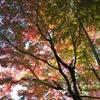 錦秋 大田黒公園の秋5