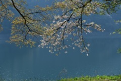 散りゆく桜を追いかけて7