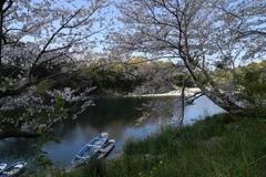 散りゆく桜を追いかけて3
