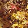 秋のお土産