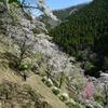 散りゆく桜を追いかけて9