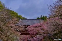醍醐寺 参道