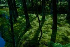 西芳寺(苔寺) 庭園