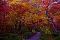 宝筐院 庭園