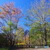 紅葉と石鎚山