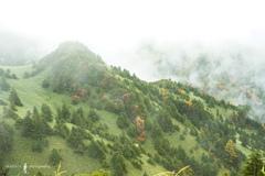 霧雨が降る森。