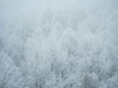 morning snow scene.❤︎
