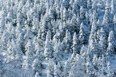 冬の温度❤︎