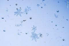 冬のシロ❁