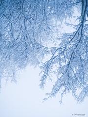 弥生の雪*