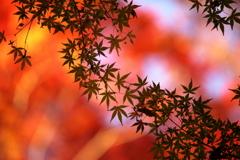 秋の天の川