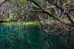 丸池様の湧水