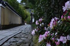 石楠花の小路