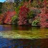 彩りの湖畔ーⅡ