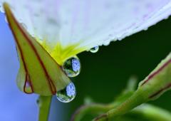 花の涙-Ⅳ