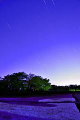 夜の芝桜の丘ー②
