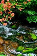 渓流に咲く-Ⅰ